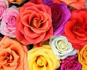 Love Blooms Roses